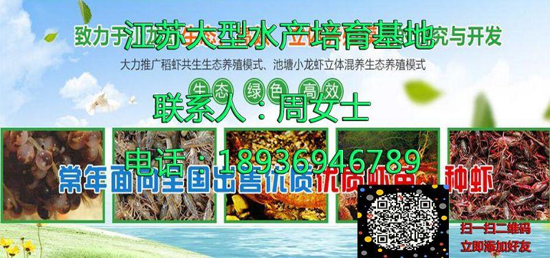 上饶万年淡水小龙虾批发上饶万年提供技术培训