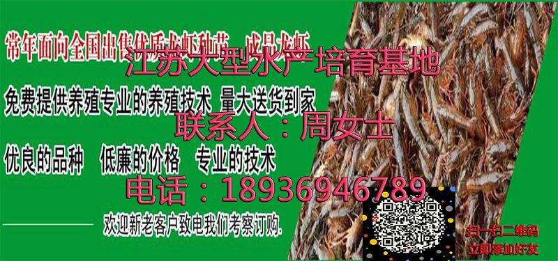 欢迎光临湘潭小龙虾苗多少钱、湘潭集团有限公司