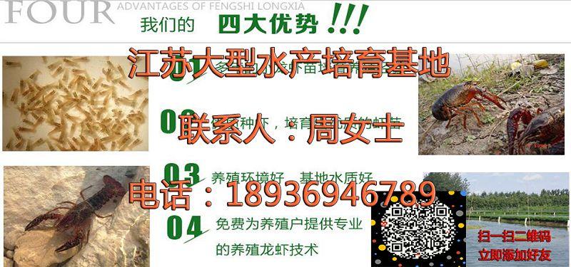 扬州维扬小龙虾养殖技术扬州维扬欢迎实地考察