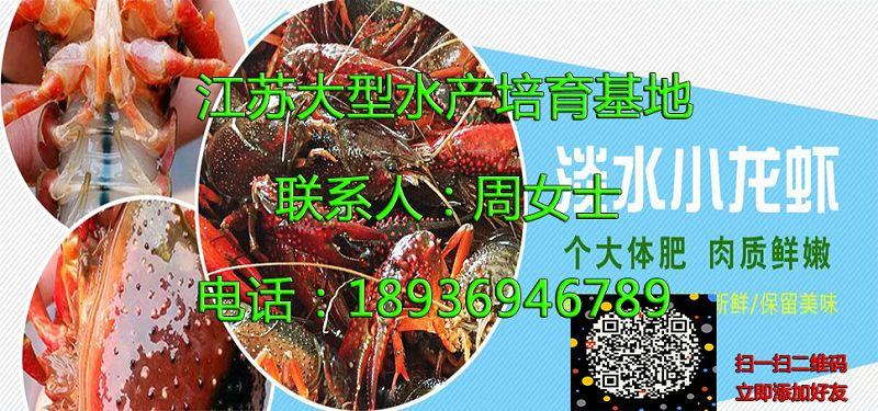 南平淡水小龙虾苗供应商南平供应厂家