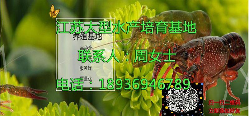 安庆太湖小龙虾种虾批发价格安庆太湖供应厂家