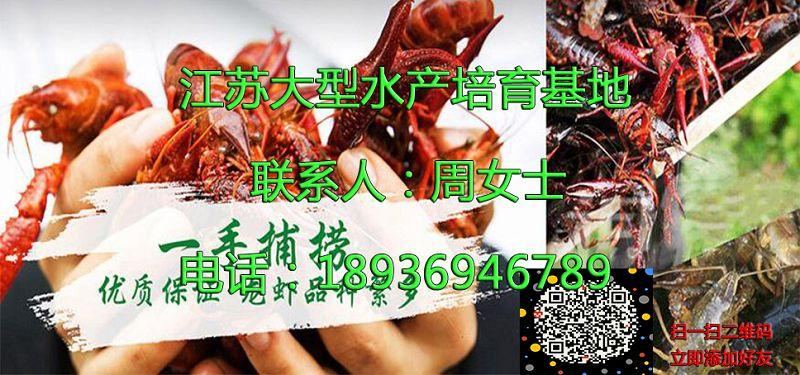雅安供应小龙虾怎么养殖、欢迎现场考察