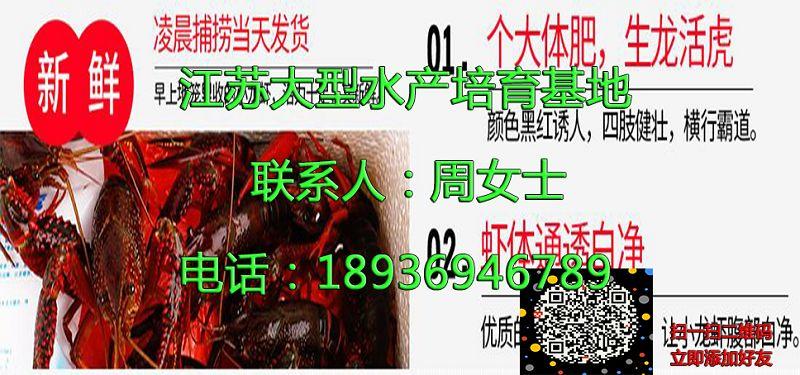 秦皇岛海港小龙虾供应商秦皇岛海港供应厂家
