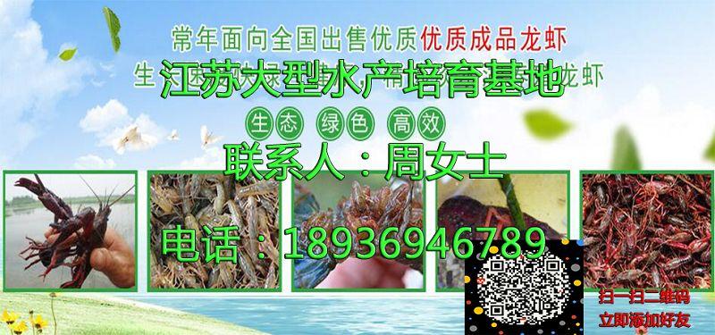 日照东港淡水小龙虾种虾一亩地大概需要多少钱日照东港提供技术培训