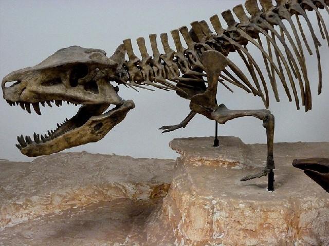 自贡地区销量大的恐龙化石――广东恐龙化石厂家