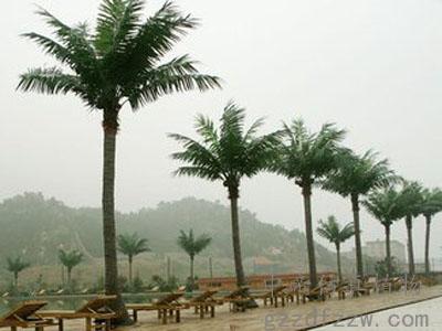 去哪买优良的仿真椰子树|仿真植物
