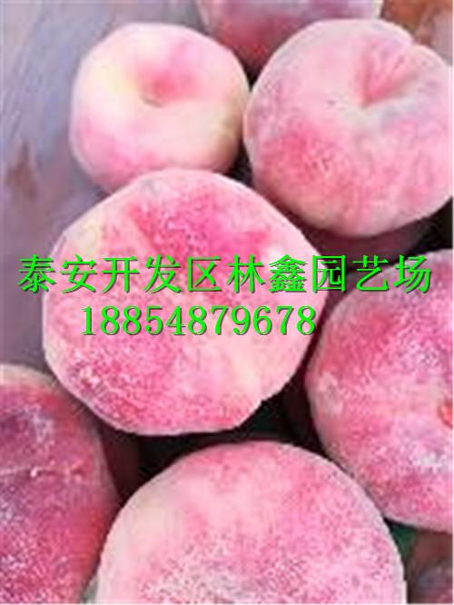 克拉玛依哪里有石榴苗此处才卖多少钱188-5487-9678
