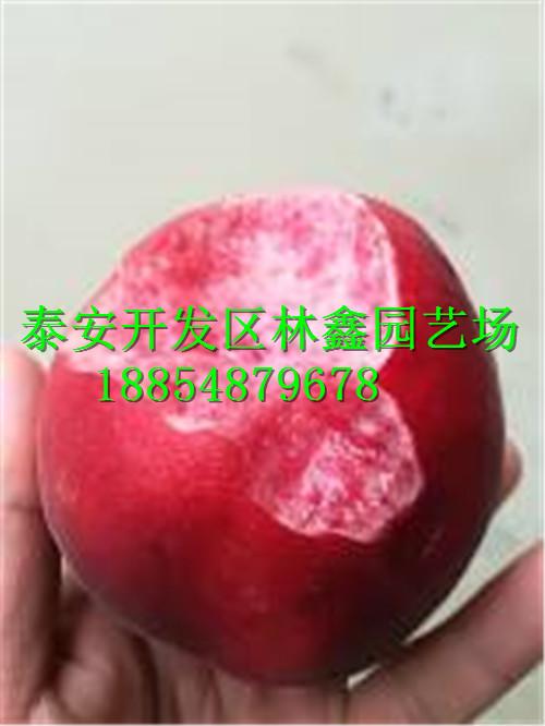 迪庆哪里有猕猴桃苗才卖多少钱批发价格