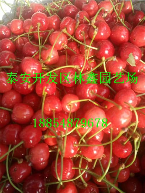 湘潭哪里有石榴苗哪里还有多少钱一棵