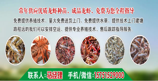 开封县精养塘龙虾技术-拇指大小龙虾苗价钱