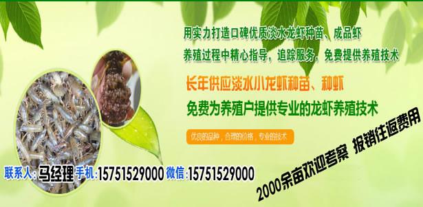 仙居县小龙虾苗市场行情-仙居县虾苗价钱多少