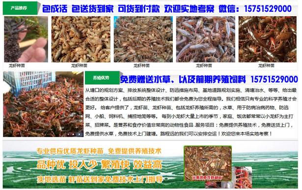 珠山区小龙虾种苗批发珠山区大龙虾苗价格