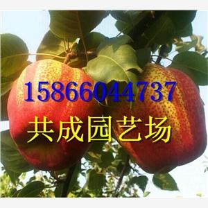 贵州黔南桃树苗的育苗场出场价