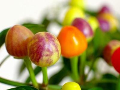 泰安地区哪里有卖优质五彩椒济南五彩椒