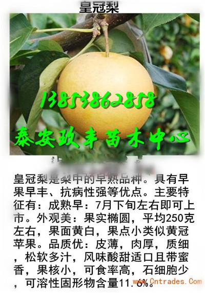 云南昆明桃树苗零卖要多少钱