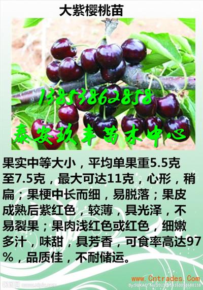 黑龙江牡丹江附近哪里有卖草莓苗欢迎来电