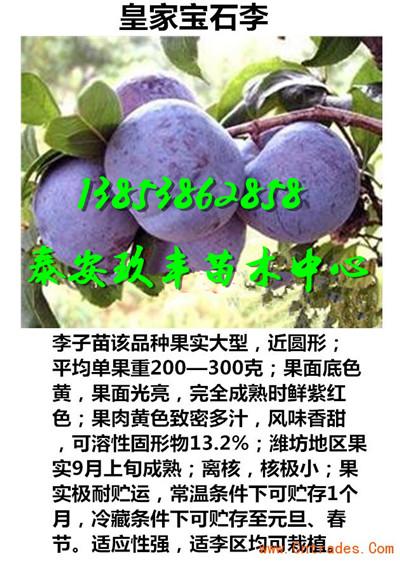 安徽蚌埠桃苗零卖要多少钱
