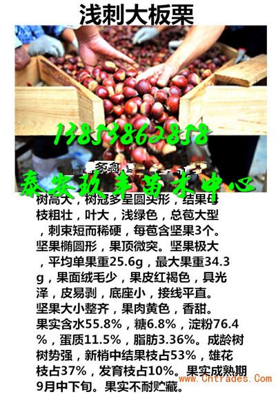 河南焦作哪里有卖草莓苗多少钱行情