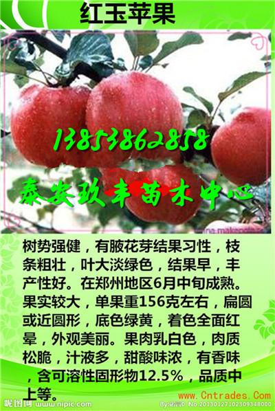 湖南长沙桃苗零卖要多少钱