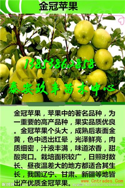 浙江衢州桃苗零卖要多少钱