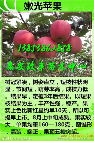 甜宝草莓苗四川巴中春季报价_云南商机网招商代理信息