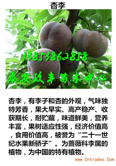 广东茂名桃树苗零卖要多少钱