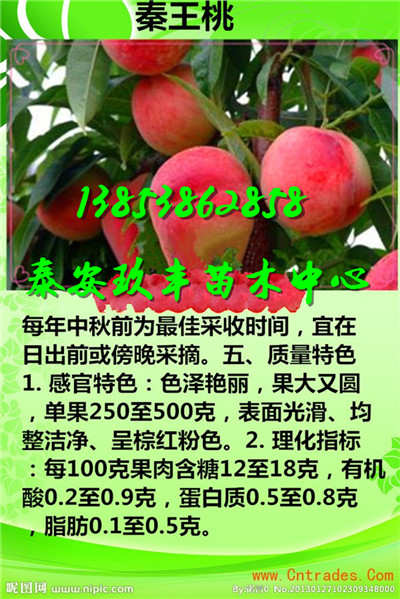湖南湘潭附近哪里有卖草莓苗哪里有