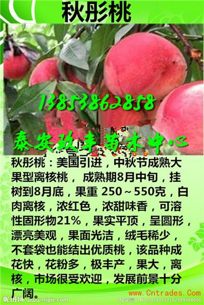 安徽蚌埠哪里有卖草莓苗多少钱格
