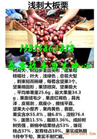 内蒙古巴彦淖尔那里还有卖柱状梨树苗多少钱一棵苗