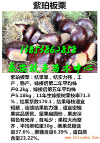 山西朔州那里还有卖红色之爱红肉苹果苗多少钱一棵苗