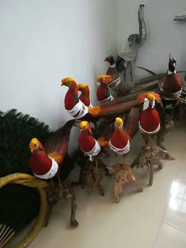 平顶山哪里出售种孔雀孔雀养殖场量大从优