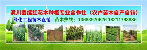 铜川刚竹价格信息技术指导
