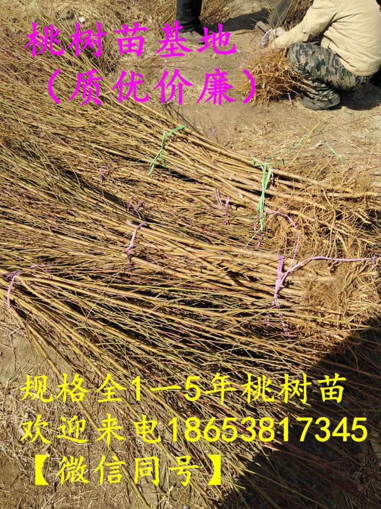 湖北咸宁嫁接2公分桃树苗销售产地