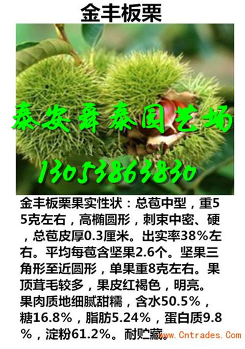 青海海东苹果树苗主产区才卖多少钱一棵2018价格