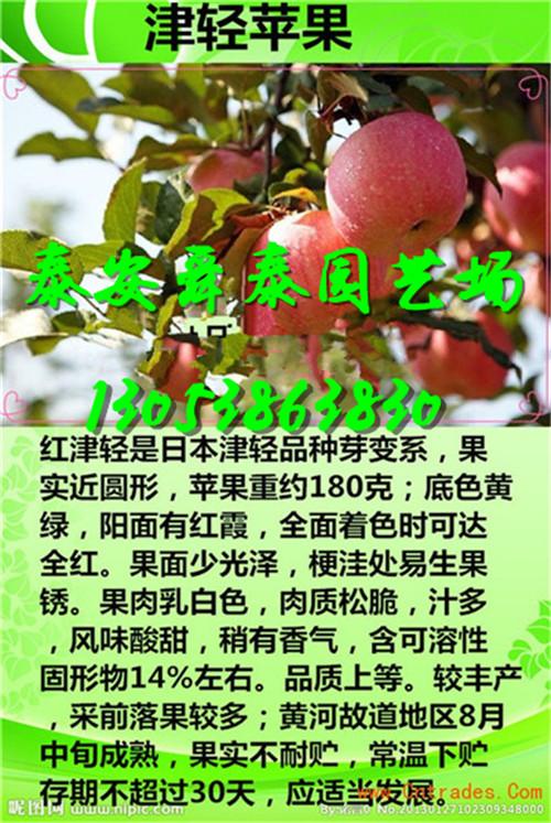 中山1公分櫻桃苗種植區