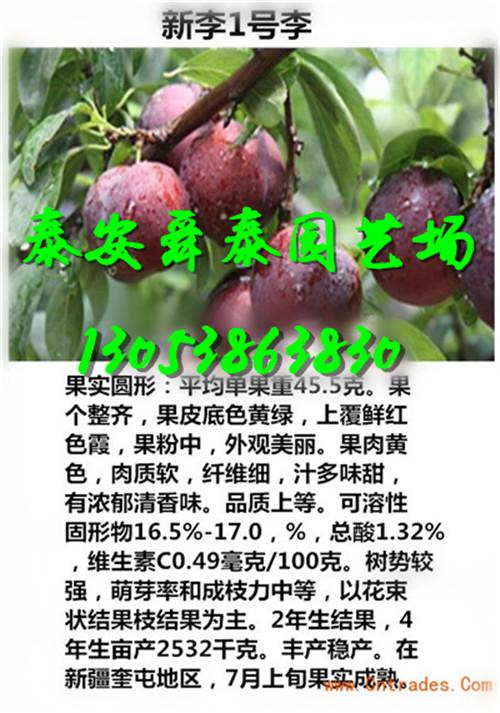 河北石家庄苹果树苗主产区一棵多少钱怎么卖的