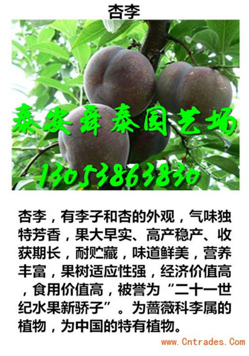 广东河源梨树苗主产区才卖多少钱一棵2018价格