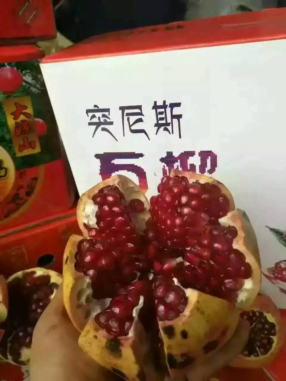 沧州新品种苹果树销售价格