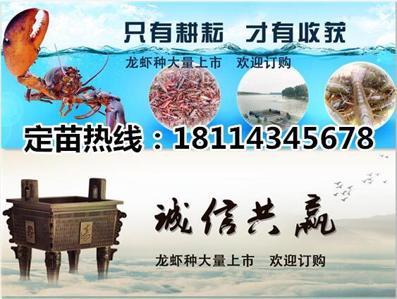 淮滨龙虾种苗价格龙虾种虾批发、淮滨养殖中心