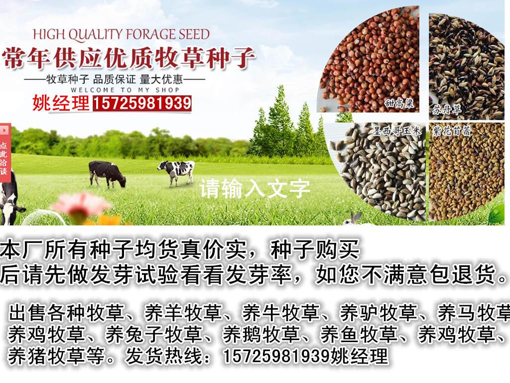 优质的番石榴种子真实价格多少钱一斤