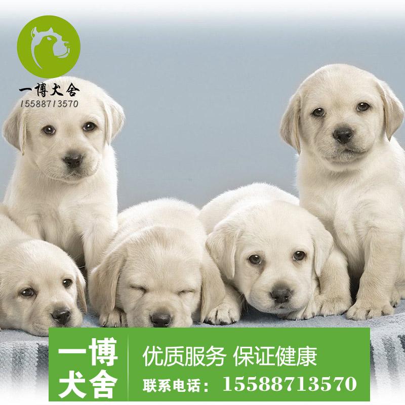 �V州哪里有�u�R犬多少�X一只