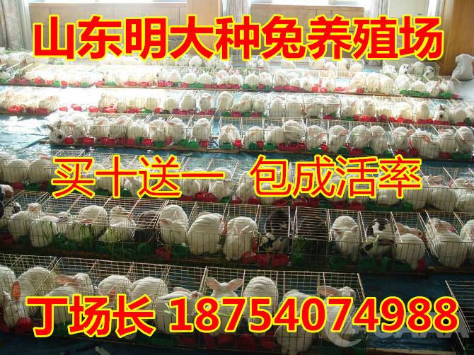 荣城种兔子笼子肉兔加工技术
