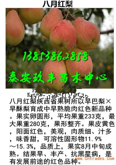 广东惠州哪里有桃树苗基地大棚种植