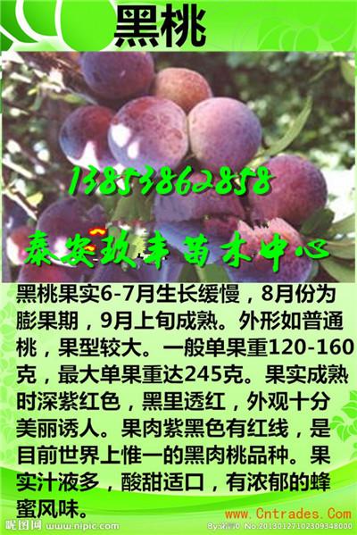 江苏扬州脆冠梨树苗直销一棵