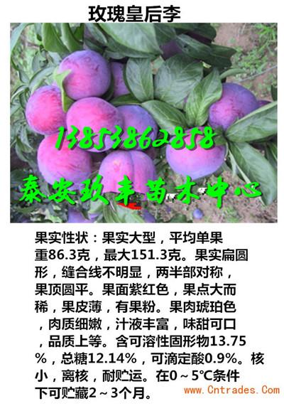 辽宁朝阳沙瓤红桃苗出售基地一棵