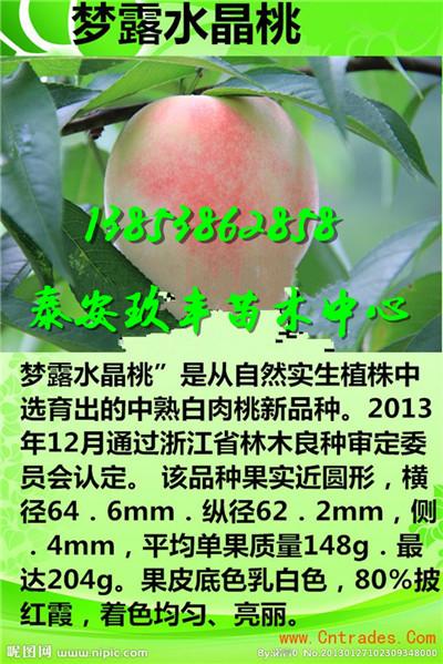宁夏固原烟富6苹果苗产量一棵