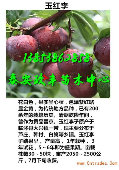广东汕头中华寿桃苗哪里价格低一棵