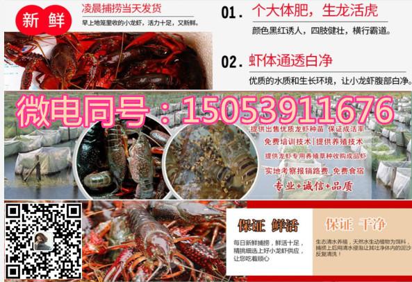 欢迎、昆明淡水小龙虾种虾养殖技术、实地考察、指导