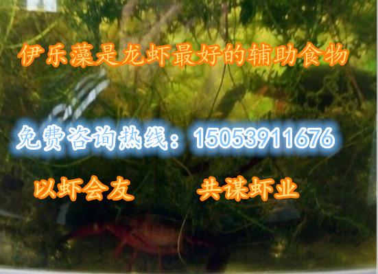提供养殖技术、吉林小龙虾多少钱、吉林、随时提供上门培训