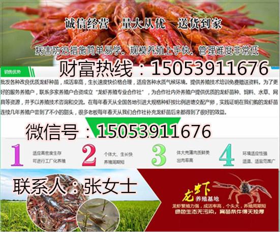 保山小龙虾苗养殖场优质小龙虾供应商